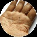 Hand_round2.png